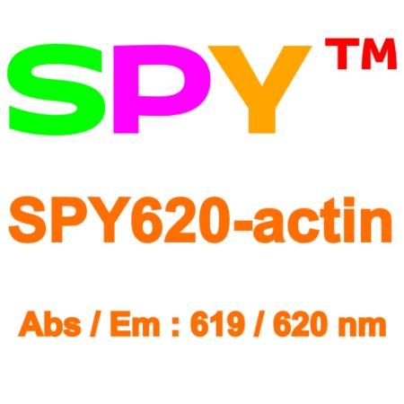 SPY620-actin